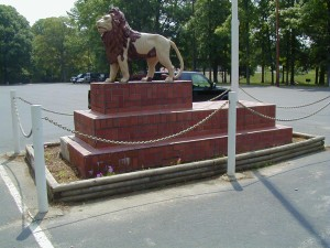 Lion rehab